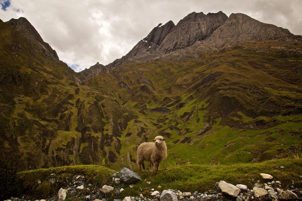 Cordillera Blanca_37__MG_5657