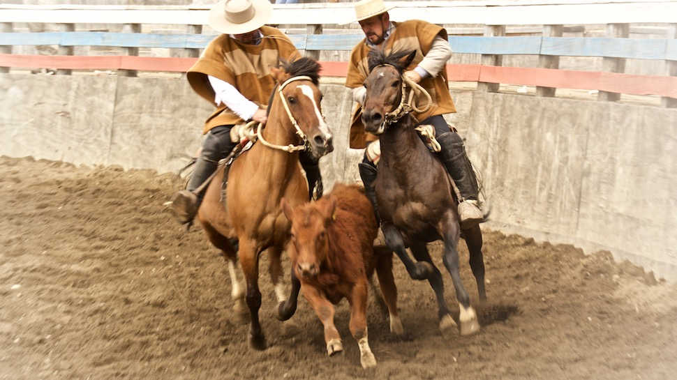 Rodeo_12__MG_6608